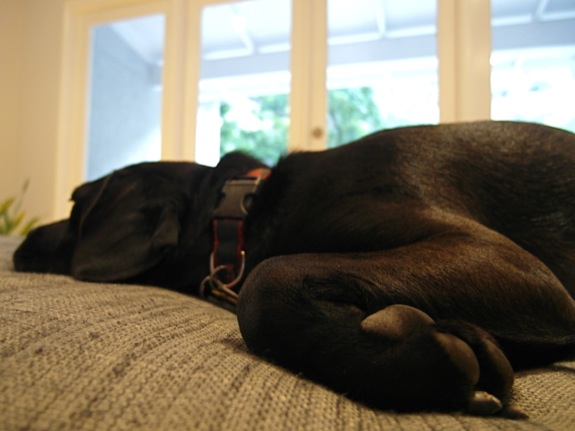 Serpentine on the sofa